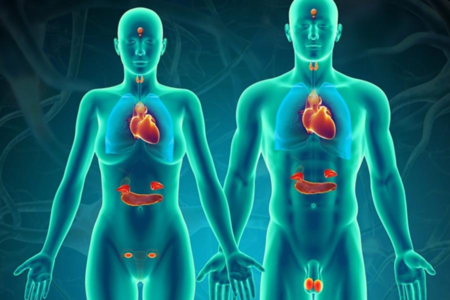 Các bệnh nội tiết thường gặp và biến chứng nguy hiểm